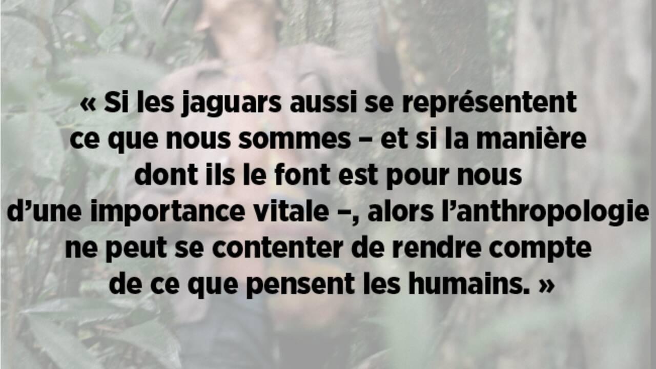 Amazonie : jaguars, tamanoirs… Oui, les êtres de la forêt pensent aussi