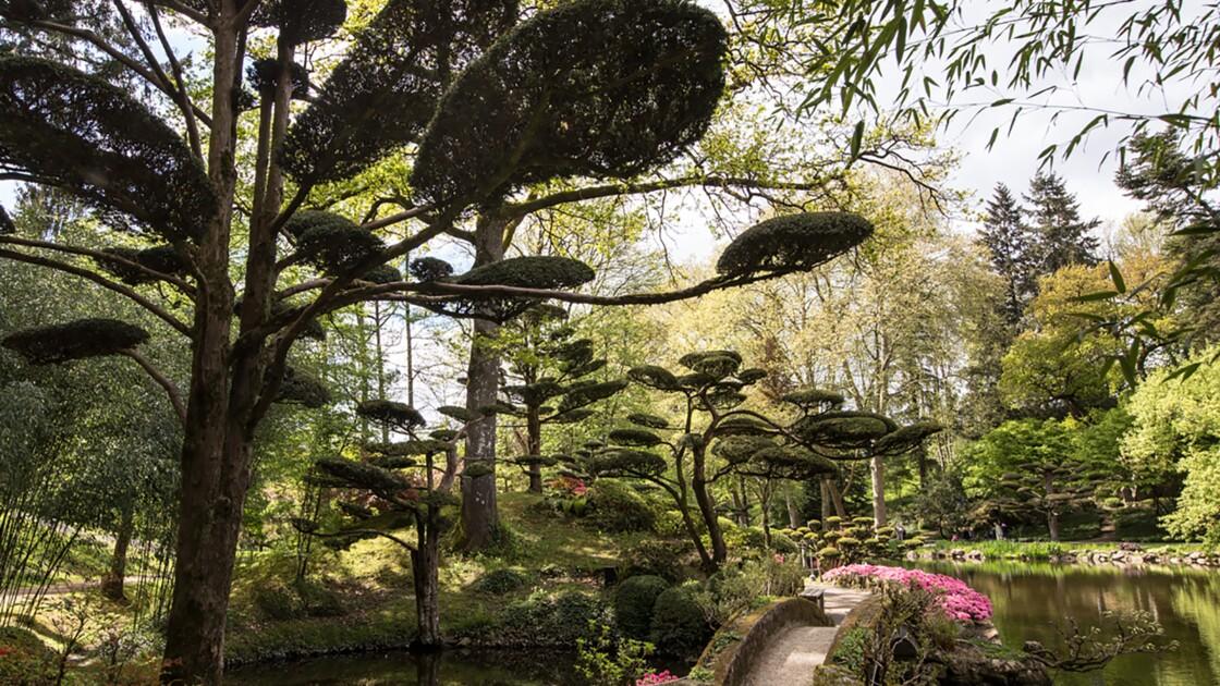 Un immense jardin japonais à Maulévrier dans le Maine et Loire