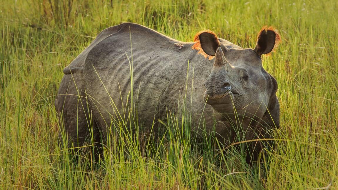 Drame de Thoiry : comment le zoo de La Flèche se prépare à accueillir deux rhinocéros