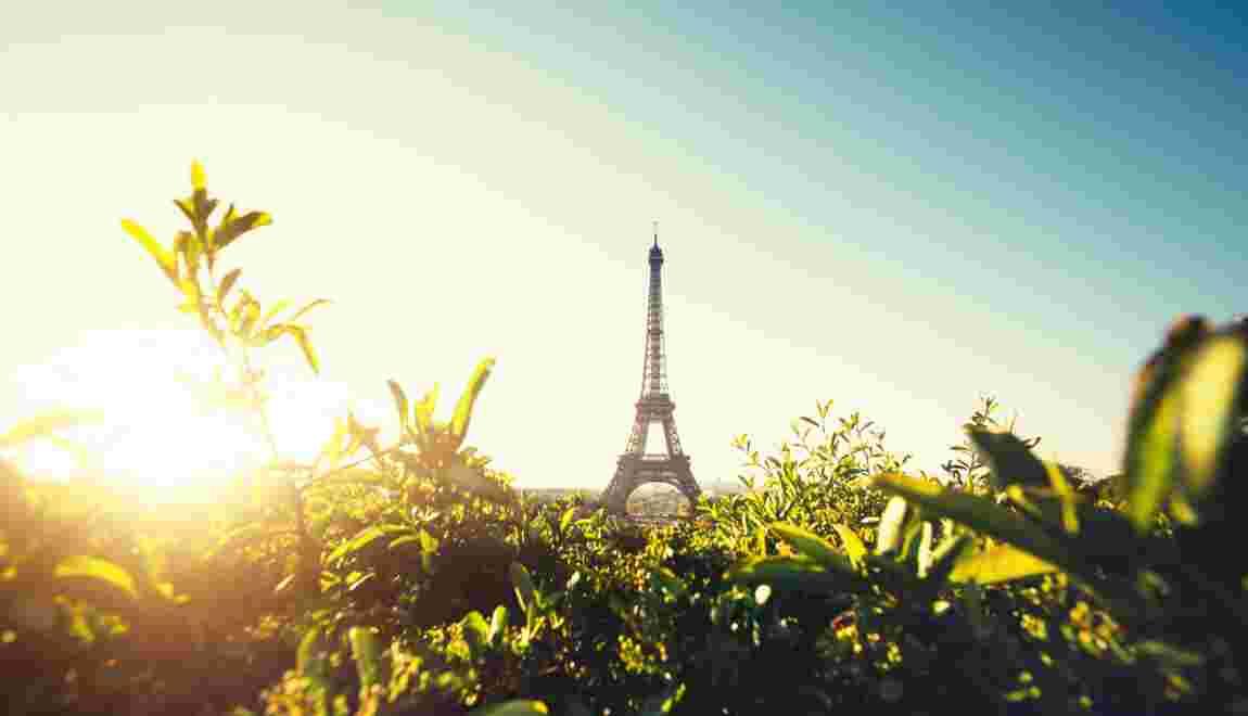 Contre les îlots de chaleur, Paris offre des arbres à ses habitants