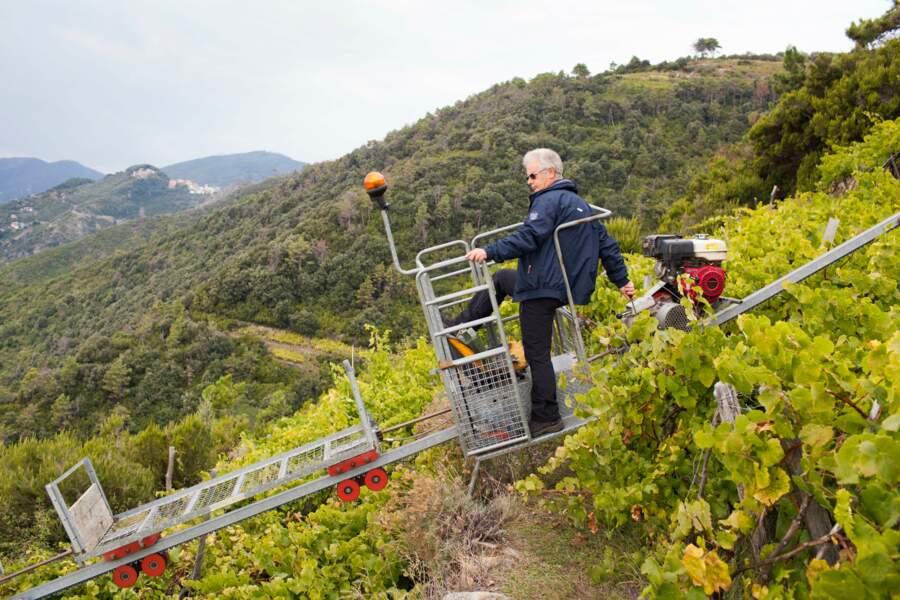 Sauro Bordoni, vigneron à Volastra