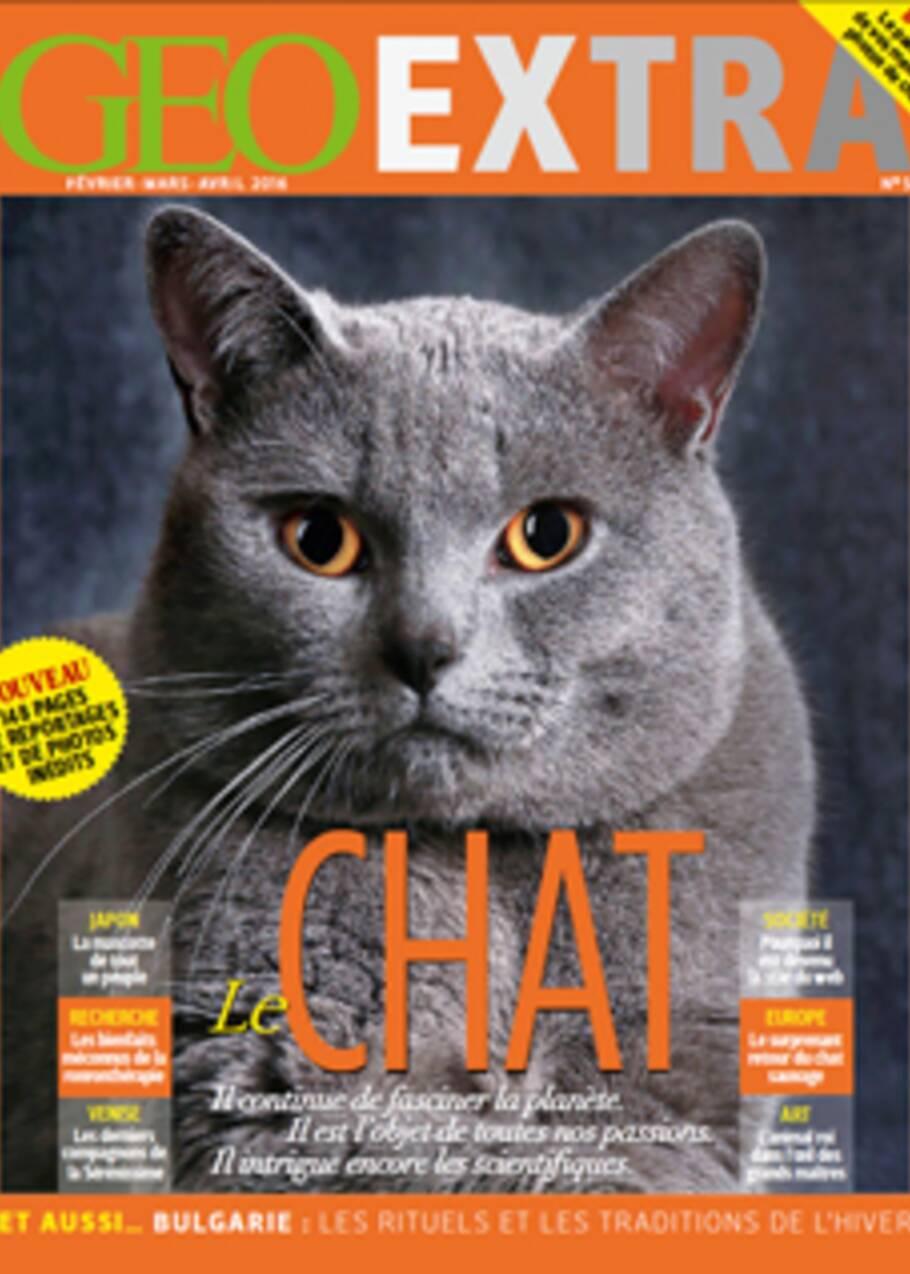 Tour du monde des chats en vogue sur le net