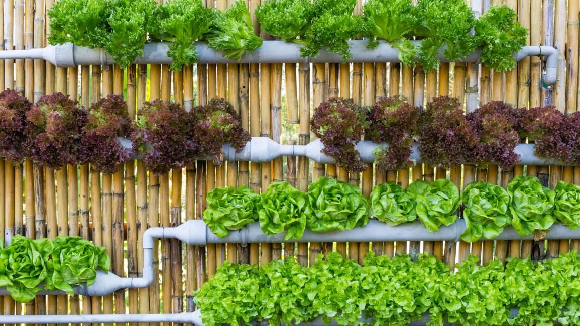 Culture hors sol : faire pousser sans terre, c'est possible !