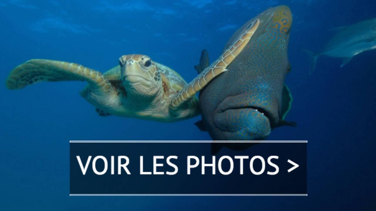 PHOTOS - 10 clichés d'animaux déjantés