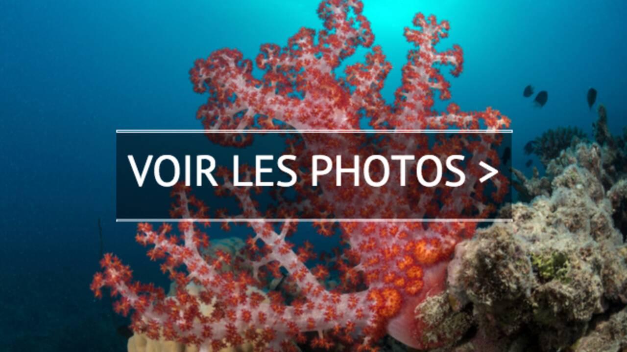 La Grande Barrière de corail : le péril et l'espoir