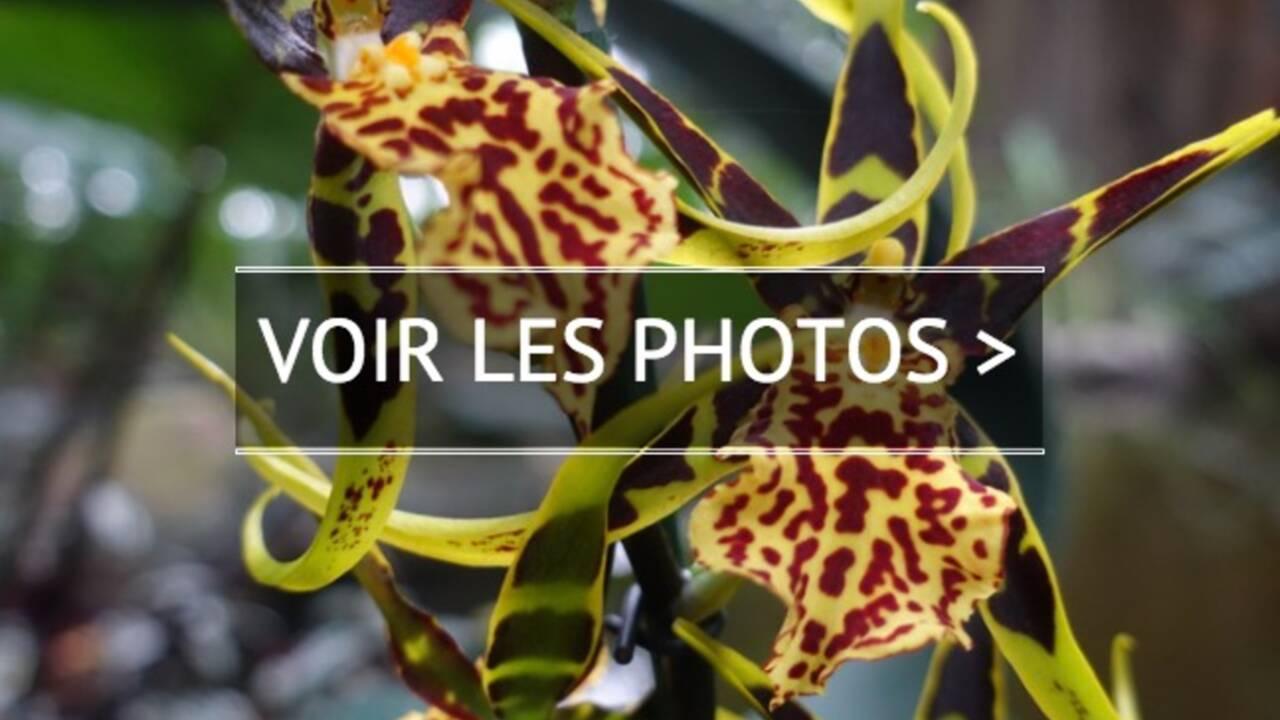 PHOTOS – Orchidées à foison au Jardin des Plantes de Paris