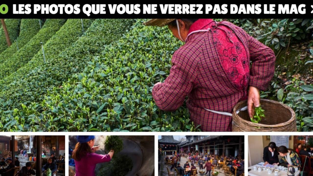 Chine : l'art du thé au Sichuan, de la plante à la tasse