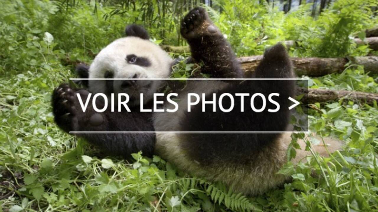 Un nouveau jour sur terre : pandas, colibris, manchots… un spectaculaire carnaval des animaux