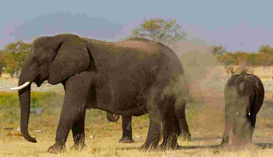 Namibie : les conservancies, des réserves modèles