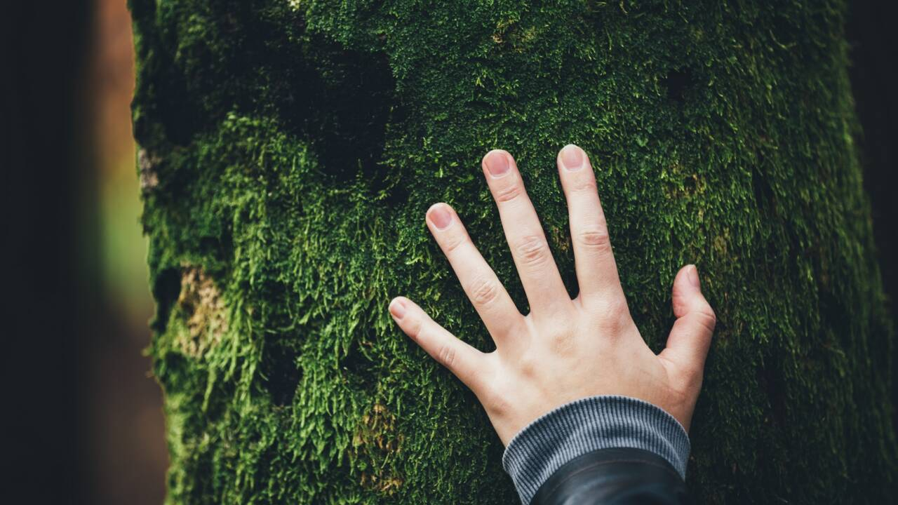 La Fondation Nicolas Hulot pour la Nature et l'Homme