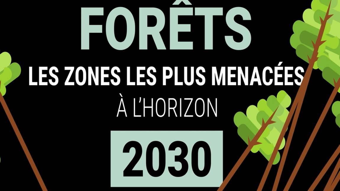 VIDÉO - Forêts : les zones les plus menacées à l'horizon 2030