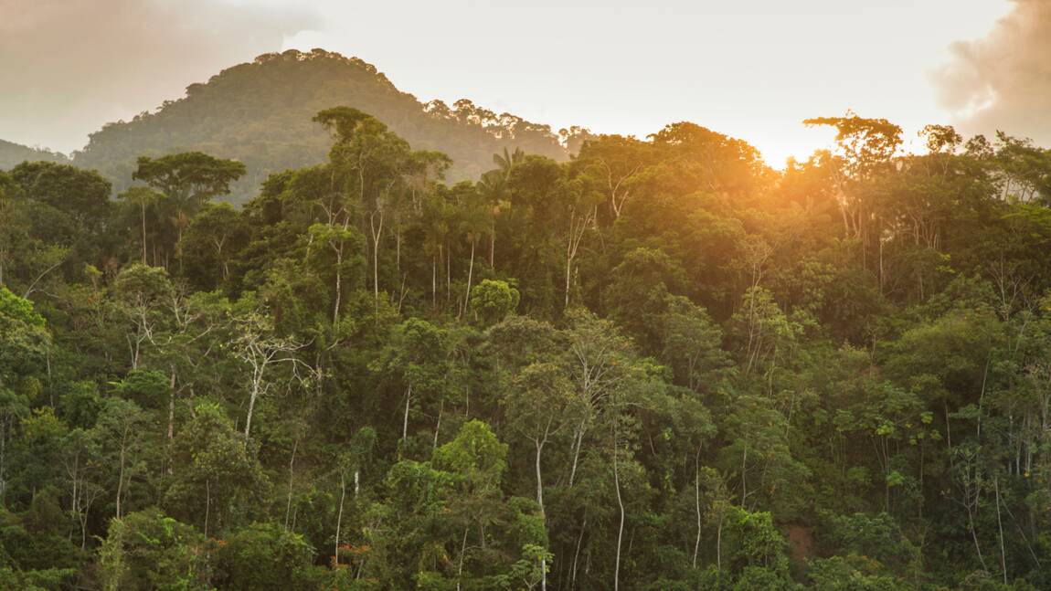 Francis Hallé, le défenseur des forêts tropicales primaires