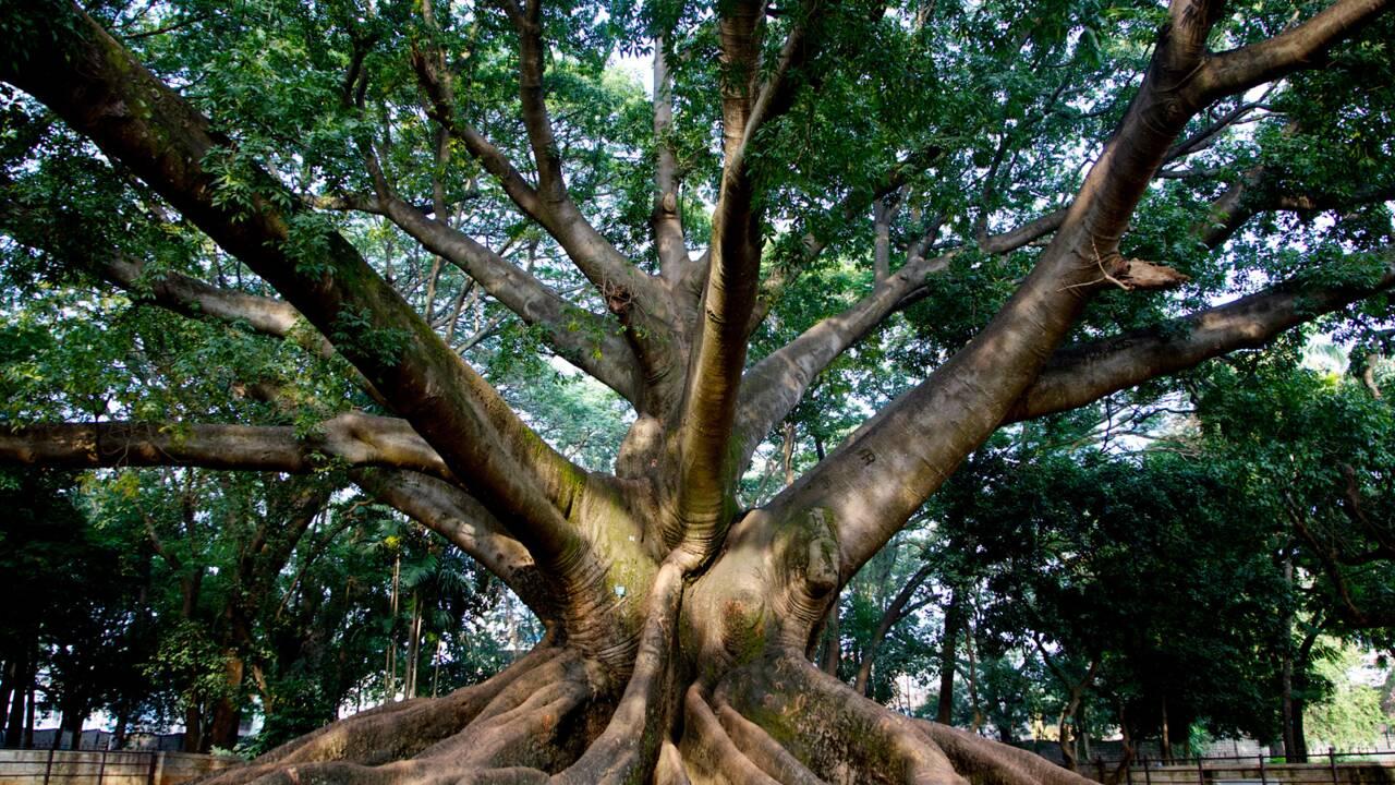 Plus de 60 000 espèces d'arbres recensées dans le monde