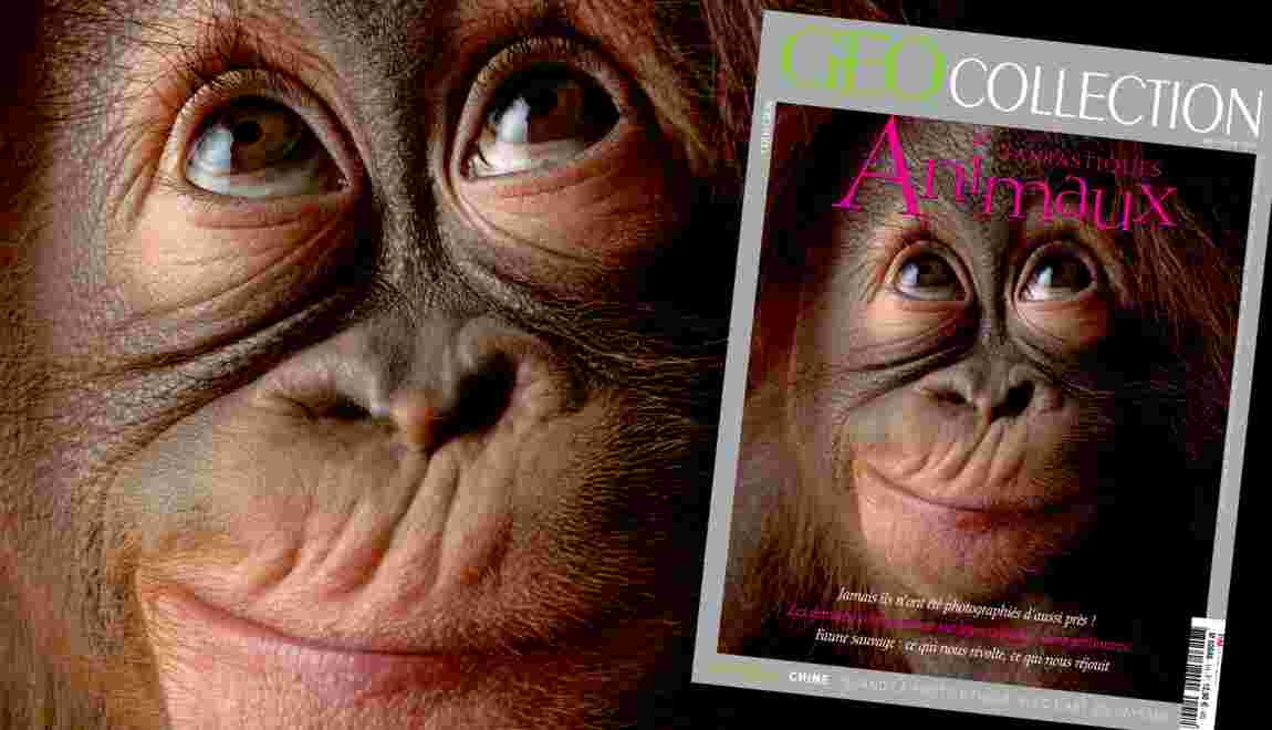 Fantastiques animaux, dans le nouveau magazine GEO Collection