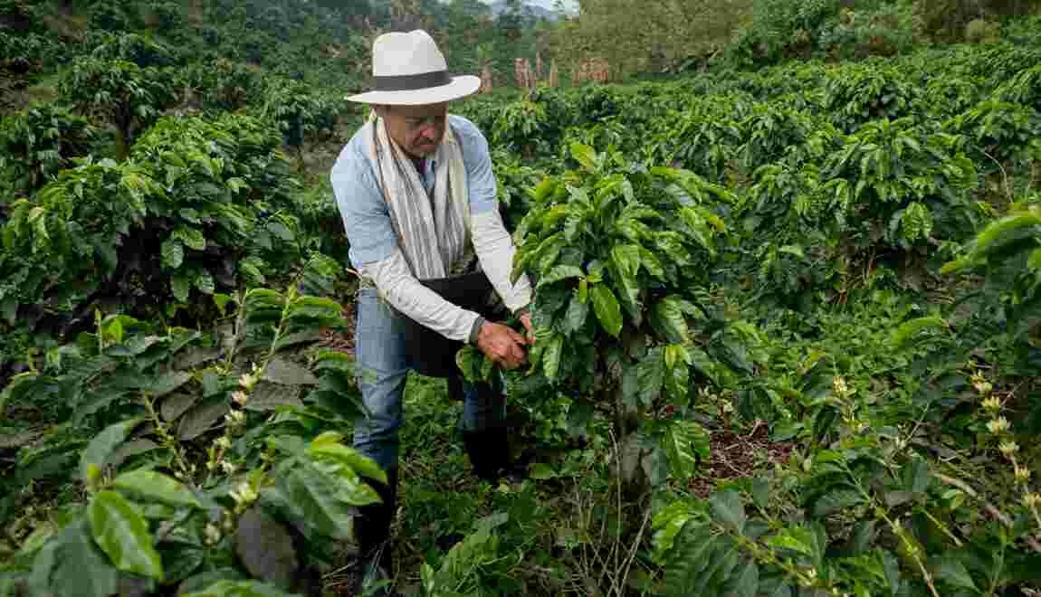 Voyages dans les terres du café