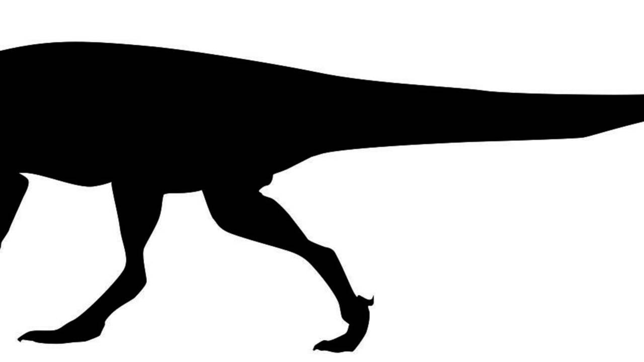 Découverte en Afrique d'empreintes d'un nouveau dinosaure géant