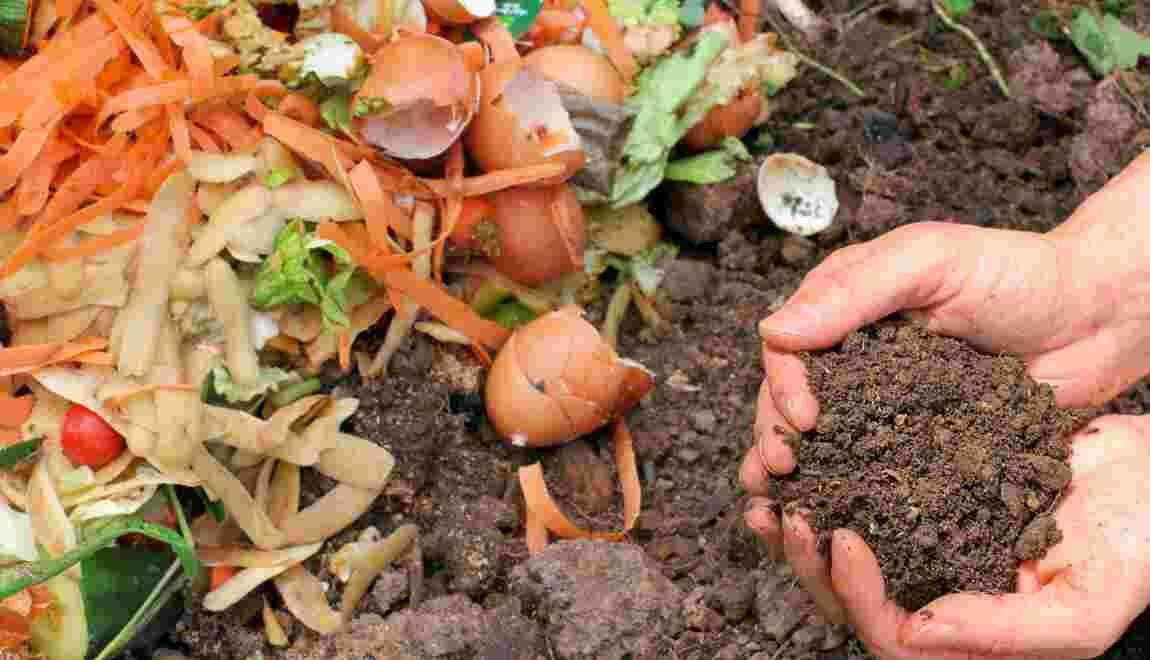 L'amendement organique, le fertilisant de l'agriculture bio