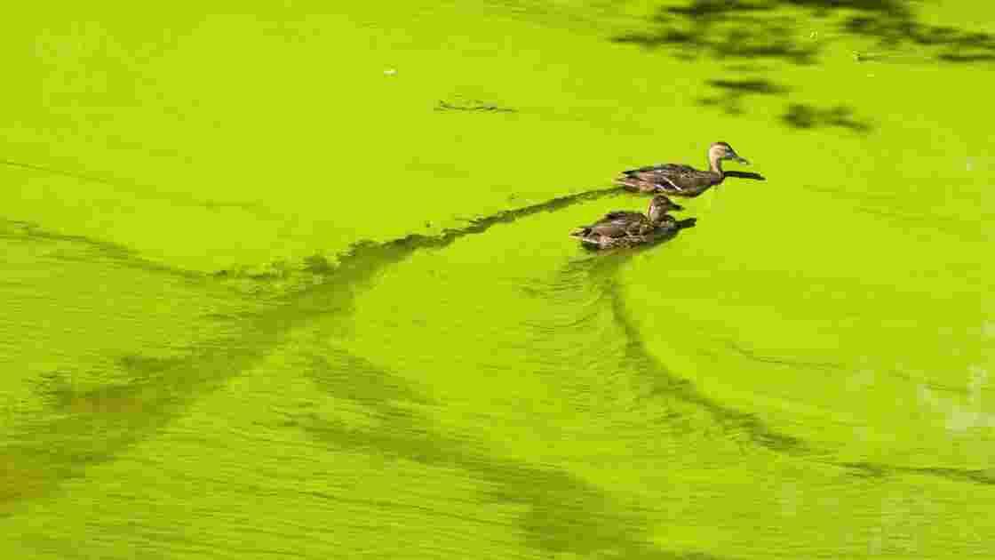 L'eutrophisation, « le vieillissement des eaux »
