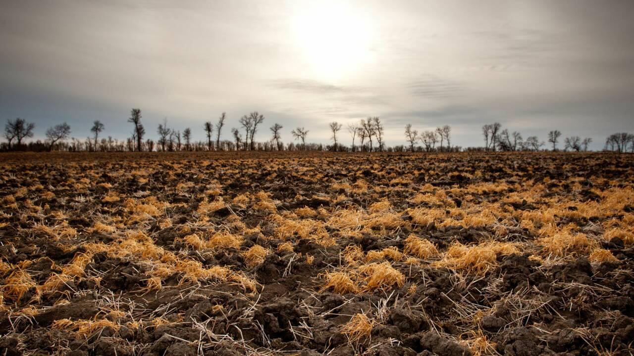 L'Homme empiète sur 75% des sols de la planète : une menace pour la terre nourricière