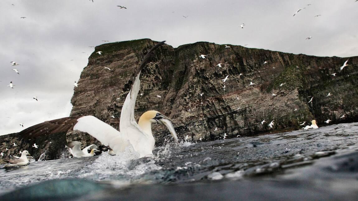 Ecosse : Shetland, le sanctuaire des oiseaux