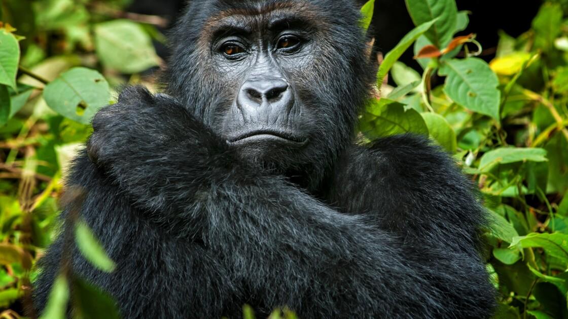 L'UICN dresse la liste rouge des espèces à protéger