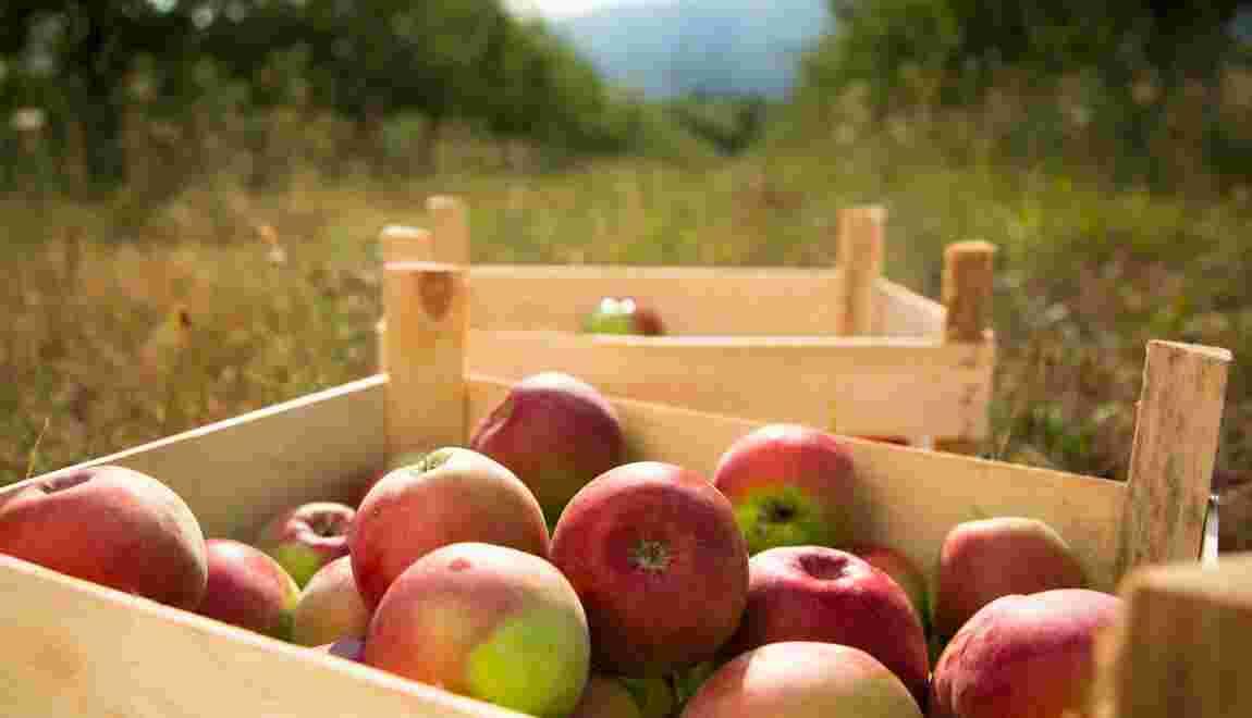 La biodynamie, ou comment mieux produire en soignant les sols