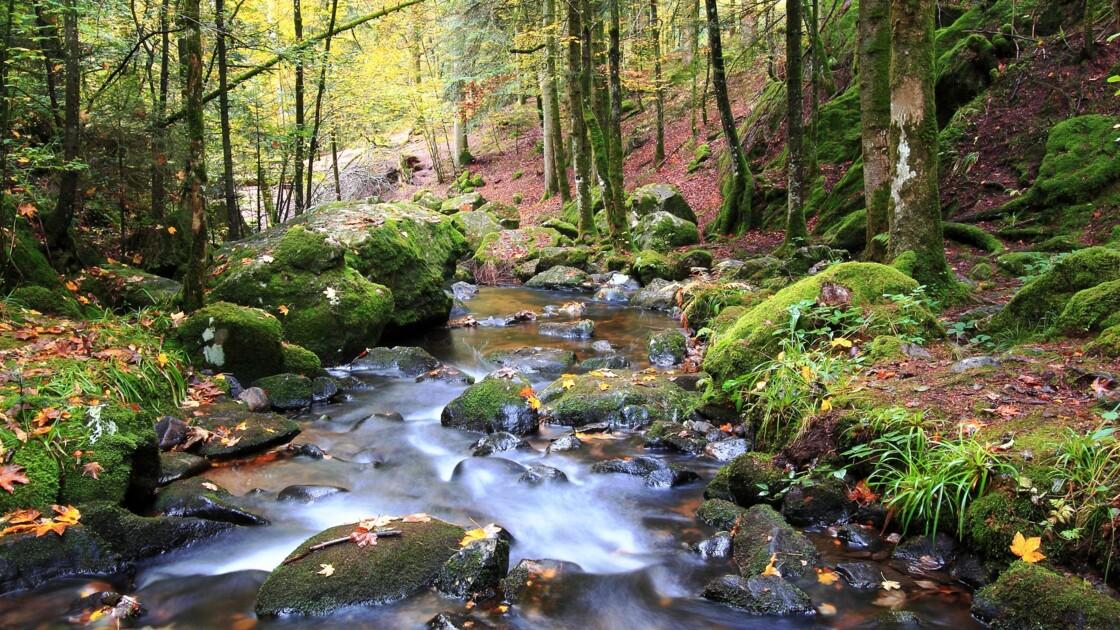 Le Code forestier œuvre pour la protection des forêts françaises