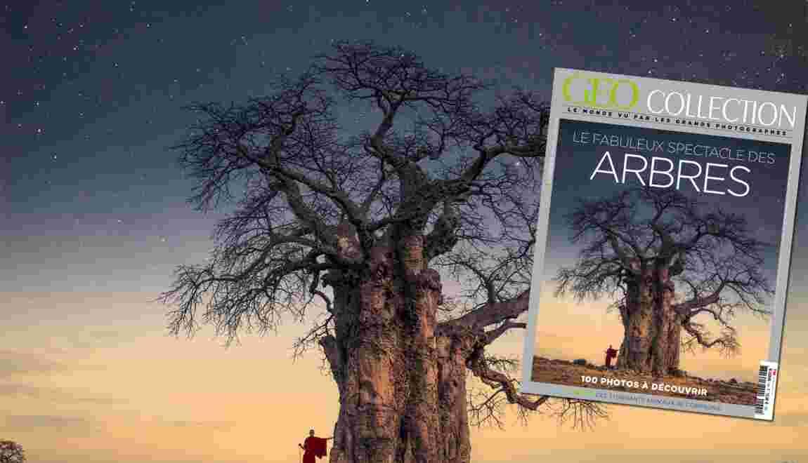 Le fabuleux spectacle des arbres, dans le nouveau numéro de GEO Collection