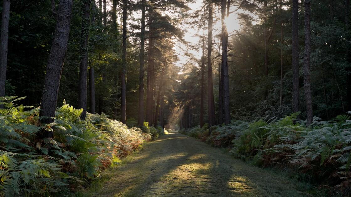 Bretagne : la mystérieuse forêt de Brocéliande