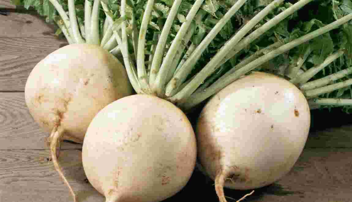 Japon : des légumes aux racines lointaines