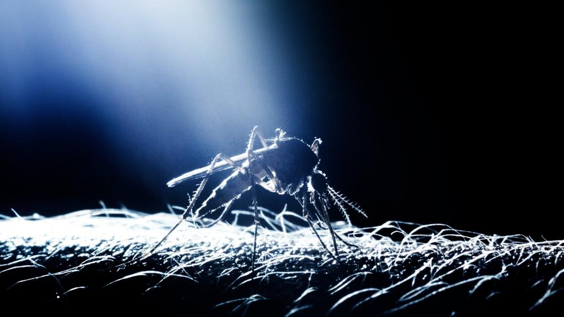 Découverte d'une nouvelle arme potentielle contre le paludisme
