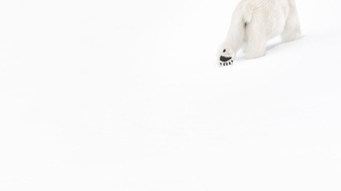 """Photo animalière : """"C'est toujours le système D qui prime"""""""