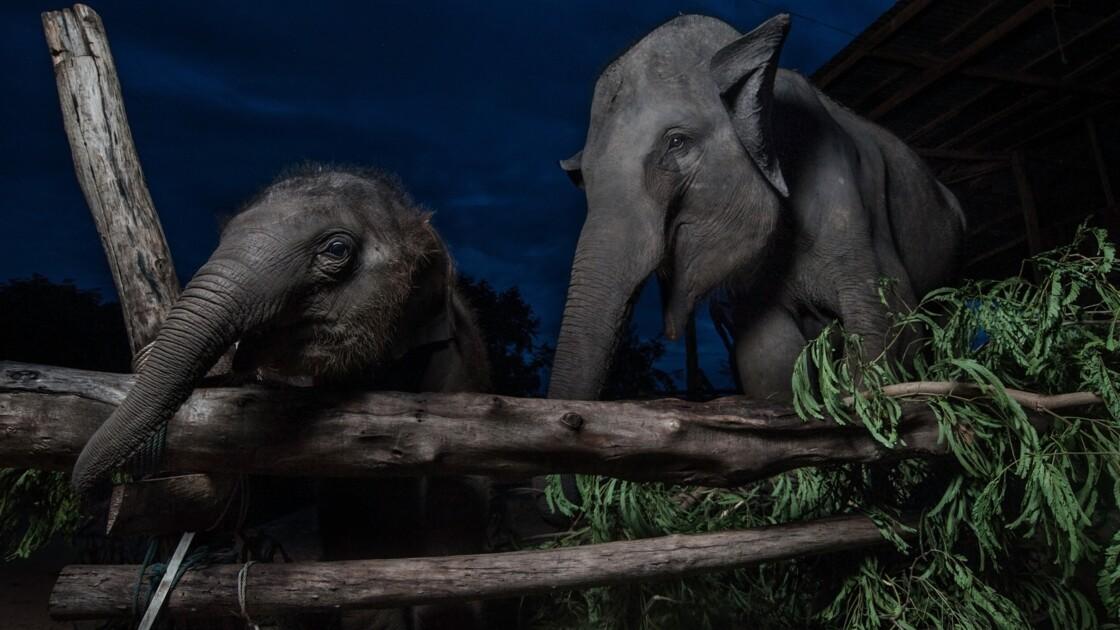 Les animaux adoptent une vie de plus en plus nocturne pour se protéger des activités humaines
