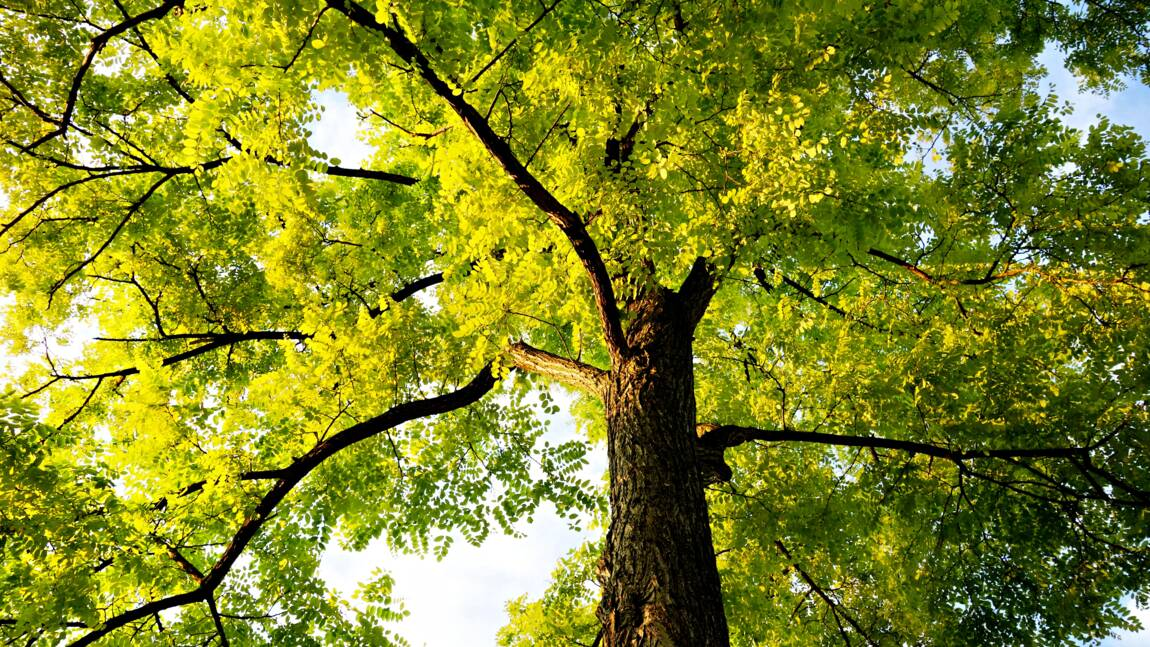 Plus près des arbres, vit-on mieux ?