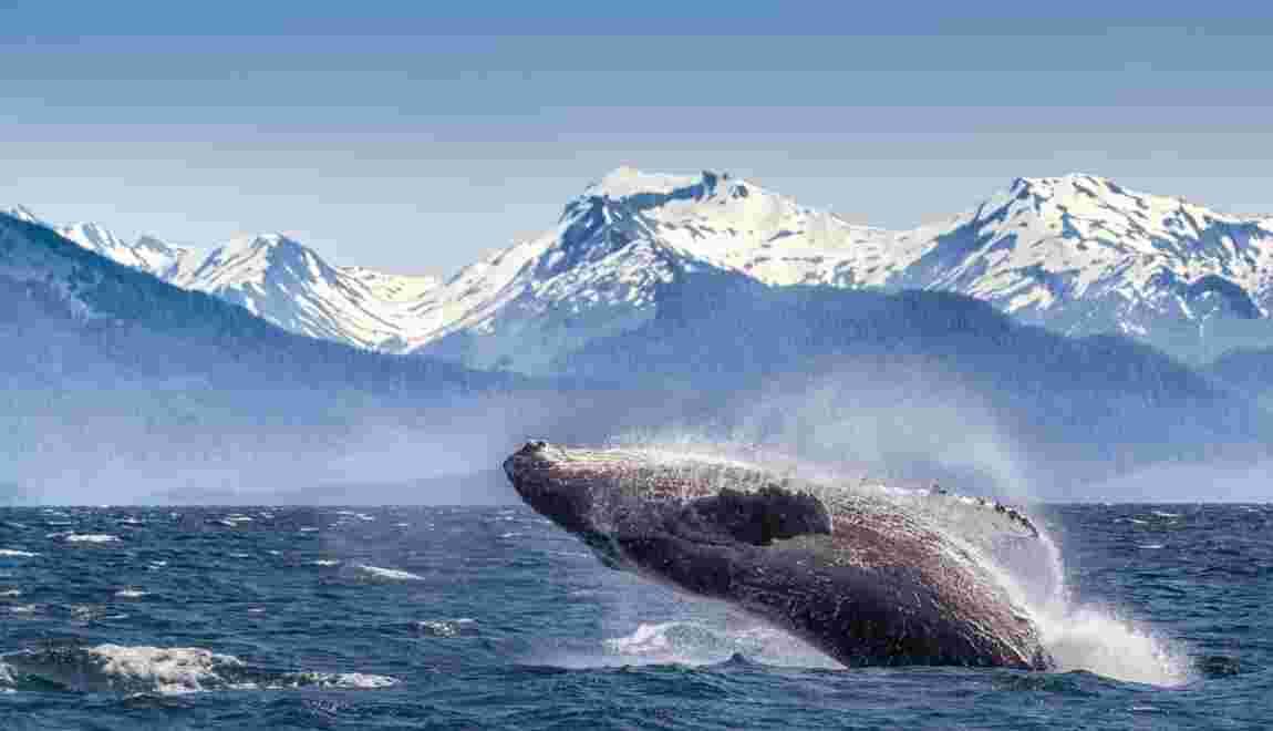 """Trois questions sur le """"chemin des baleines"""""""