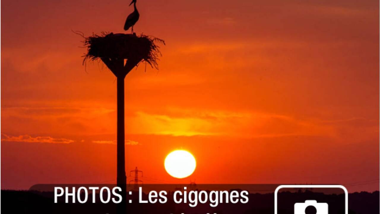 PHOTOS - La France nature : la Normandie