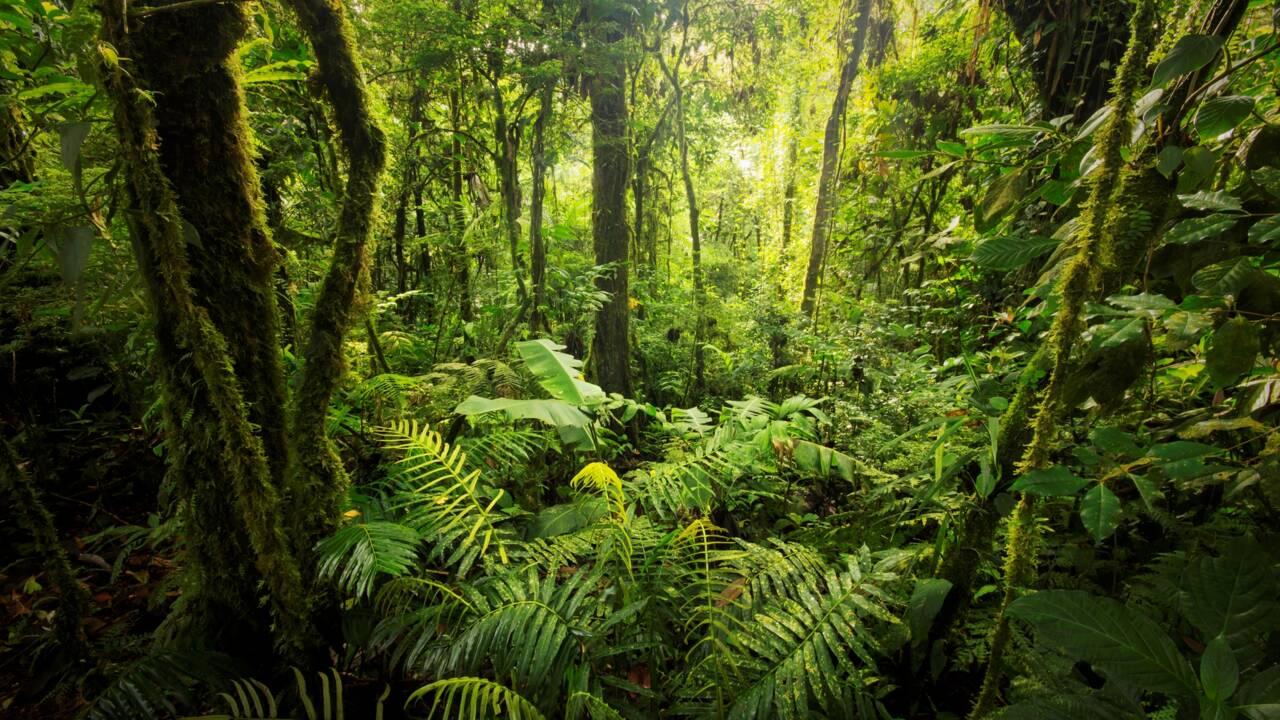 Les forêts primaires, des écosystèmes en voie d'extinction