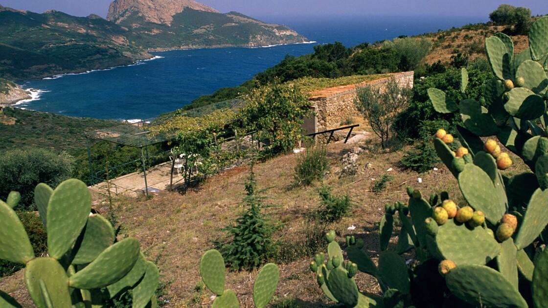 Les mystères de Corse : Occi, un village fantôme d'une envoûtante poésie