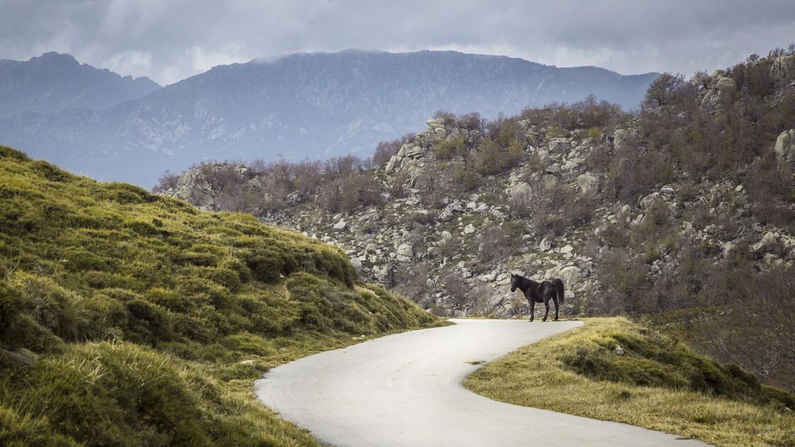 Mystères de Corse : Zicavo, un village sans reproche, mais pas sans peur
