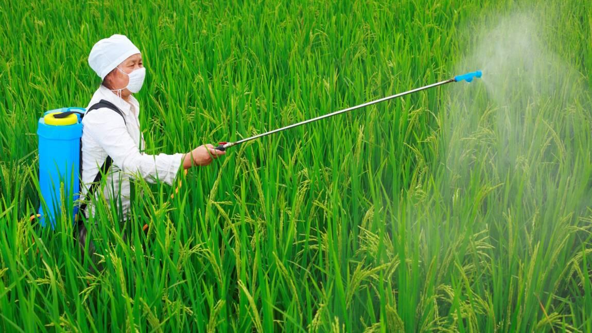 Les pesticides, alliés toxiques de l'agriculture française