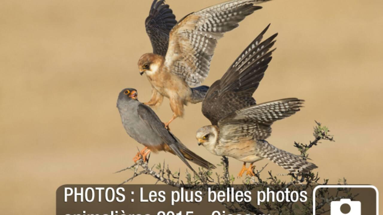 PHOTOS : Au plus près de la faune sauvage