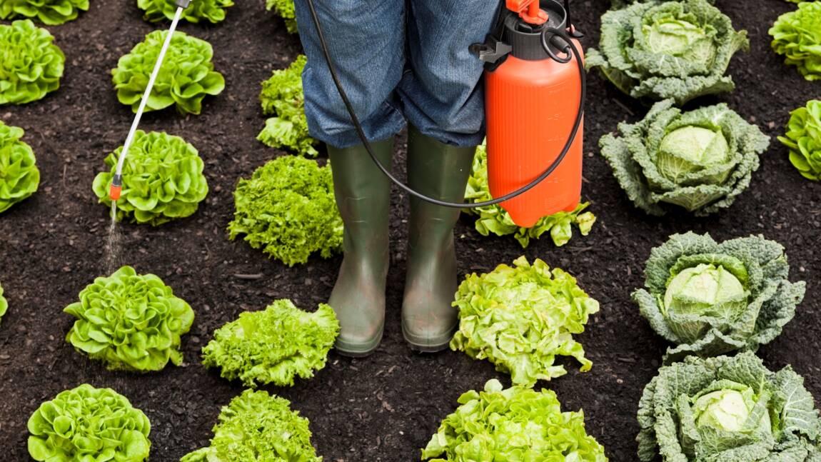 Les produits phytosanitaires, des médicaments à risque pour les plantes