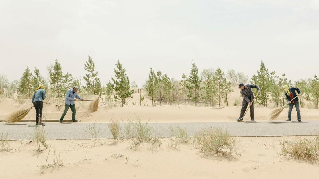 Chine : des milliards d'arbres pour contrer l'avancée du désert