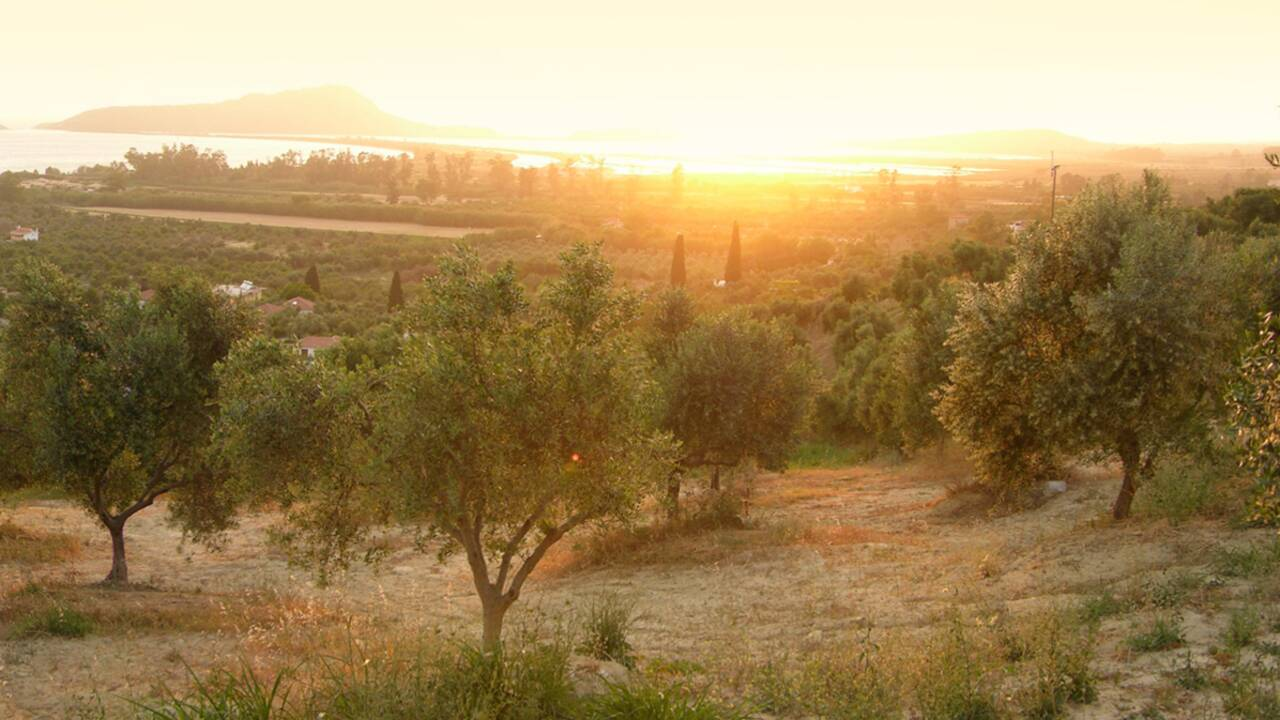 Grèce : À Kalamáta, on vit par et pour l'olive
