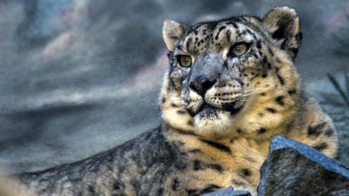 Biodiversité : Pourquoi tant d'animaux risquent-ils de disparaître ?