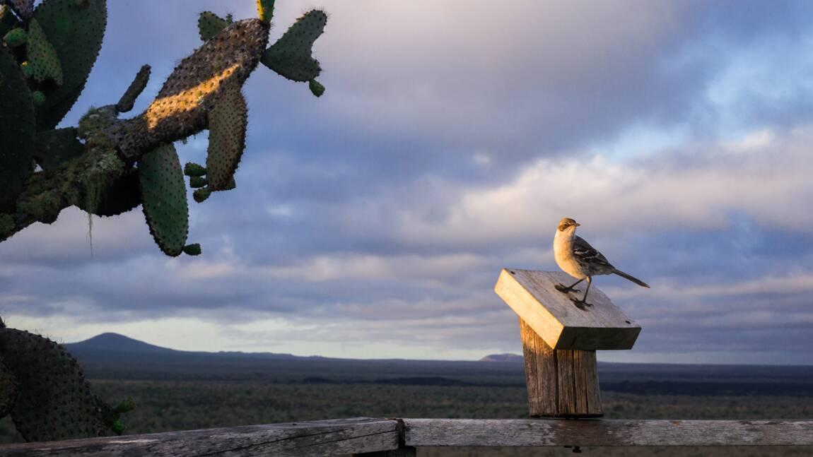 VIDÉO – Galápagos : attention fragiles