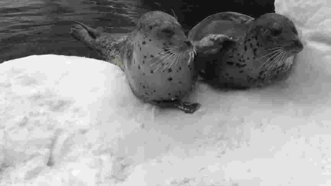 VIDÉO - La neige fait le bonheur des animaux du zoo de Portland