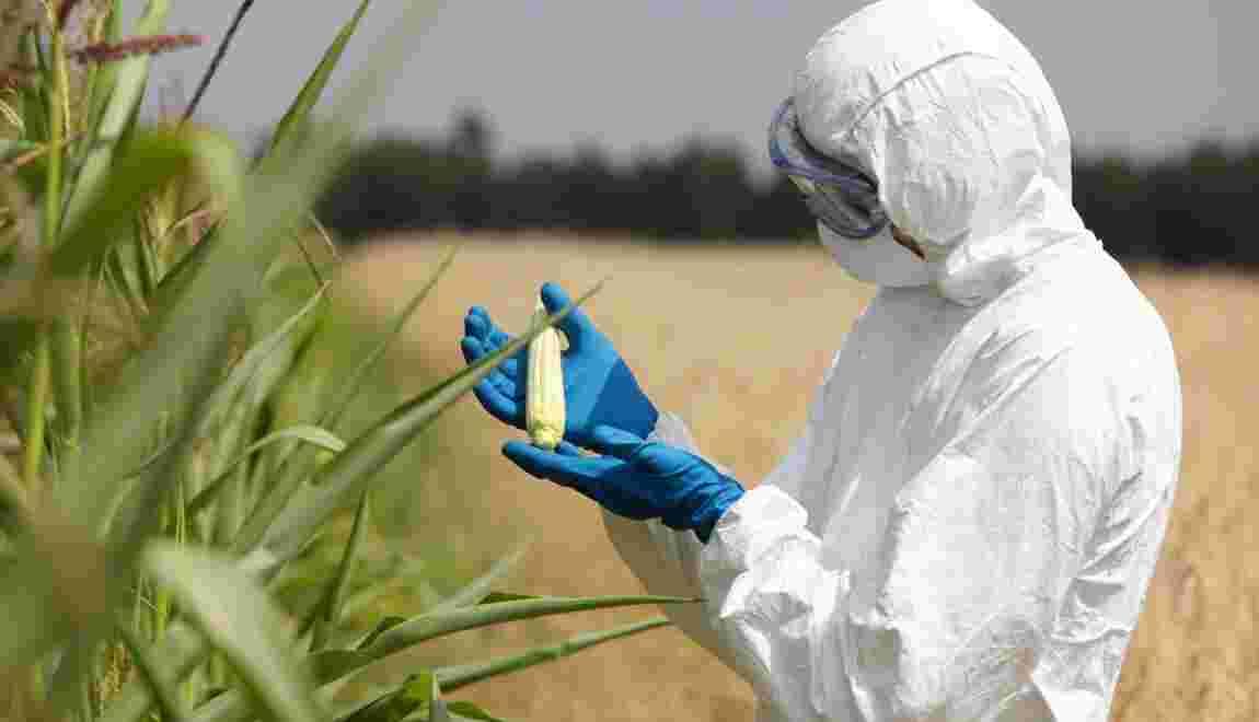 Organisme génétiquement modifié : de quoi parle-t-on ?