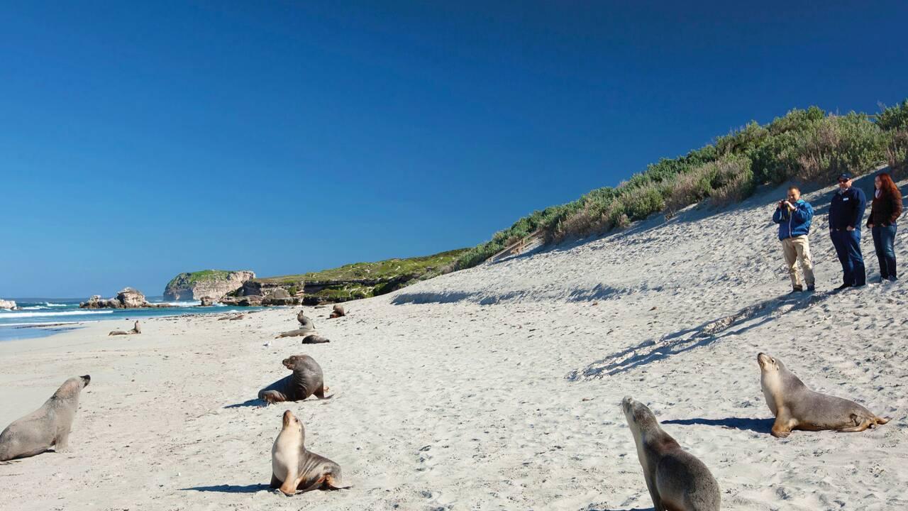 Kangaroo Island, la nature à l'état pur