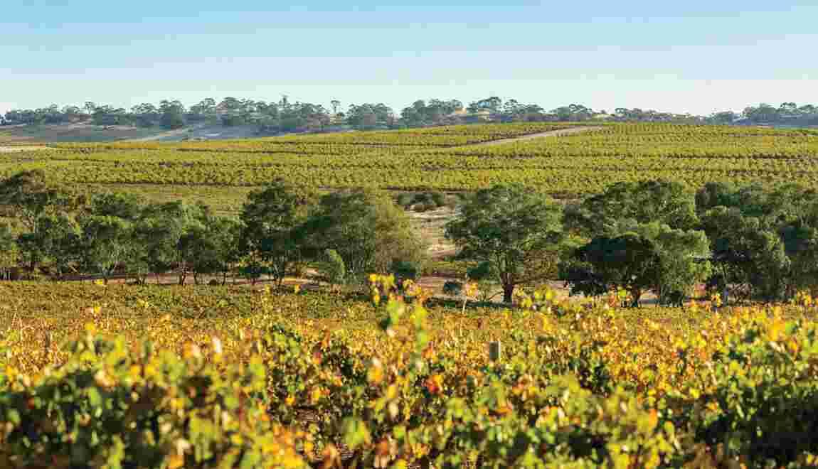 Barossa Valley, au bonheur des vignes